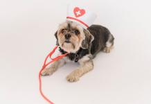 5 Best Pet Care Centre in Philadelphia