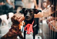 5 Best Pet Shops in Houston