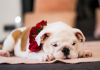 5 Best Pet Shops in Indianapolis