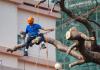 5 Best Tree Services in Philadelphia