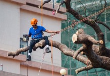 5 Best Tree Services in Philadelphia