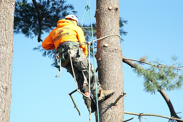 All The Above Tree Service