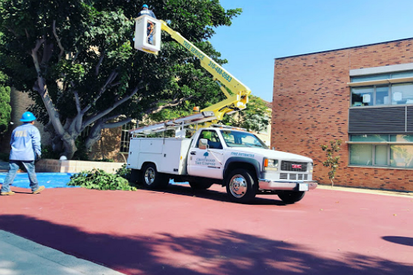 Crestwood Tree Services