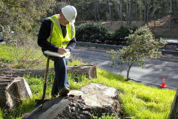 Evergreen Arborist Consultants