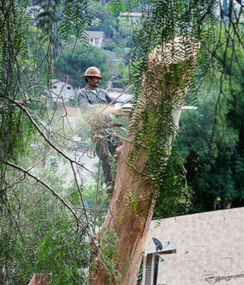 Gabriel´s Tree Service & Landscaping