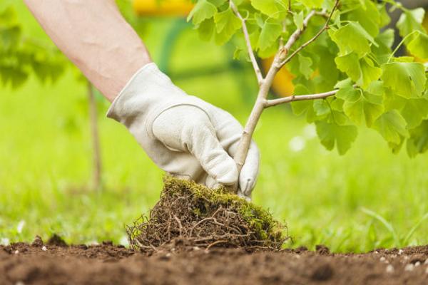 The Urban Arborist