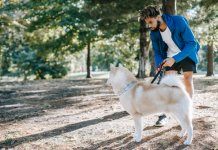 5 Best Dog Walkers in San Antonio