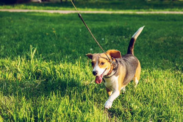 5 Best Dog Walkers in San Jose