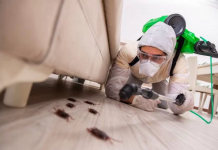 5 Best Exterminators in Philadelphia