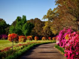 5 Best Gardeners in San Diego