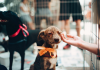 5 Best Pet Shops in Charlotte