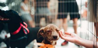 5 Best Pet Shops in Charlotte