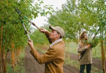 5 Best Tree Services in Columbus