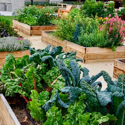 California Farm & Garden