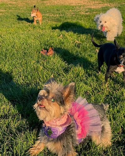 Dirty Paws Pet Sitting & Dog Walking