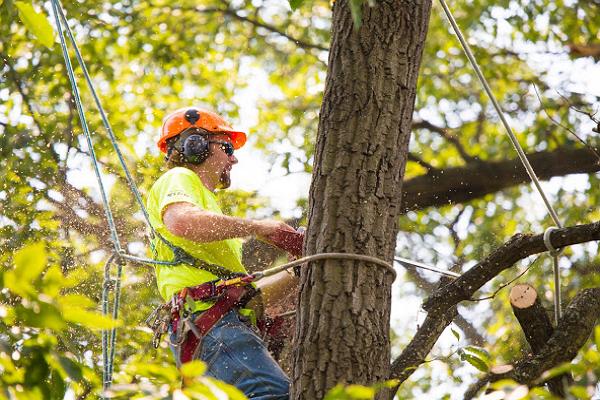 Tree Care Fort Worth
