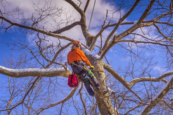 TreeBien Tree Care