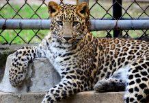 5 Best Aquarium/Zoos in San Jose