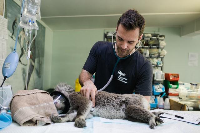 5 Best Veterinarians in Austin