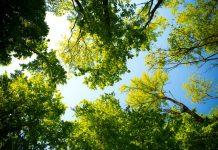 best arborists in Columbus