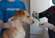 best pet care centers in San Antonio