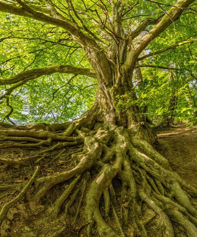 Best Arborists in San Antonio