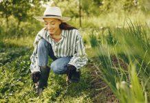 Best Gardeners in San Jose