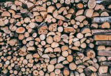 5 Best Tree Services in Jacksonville