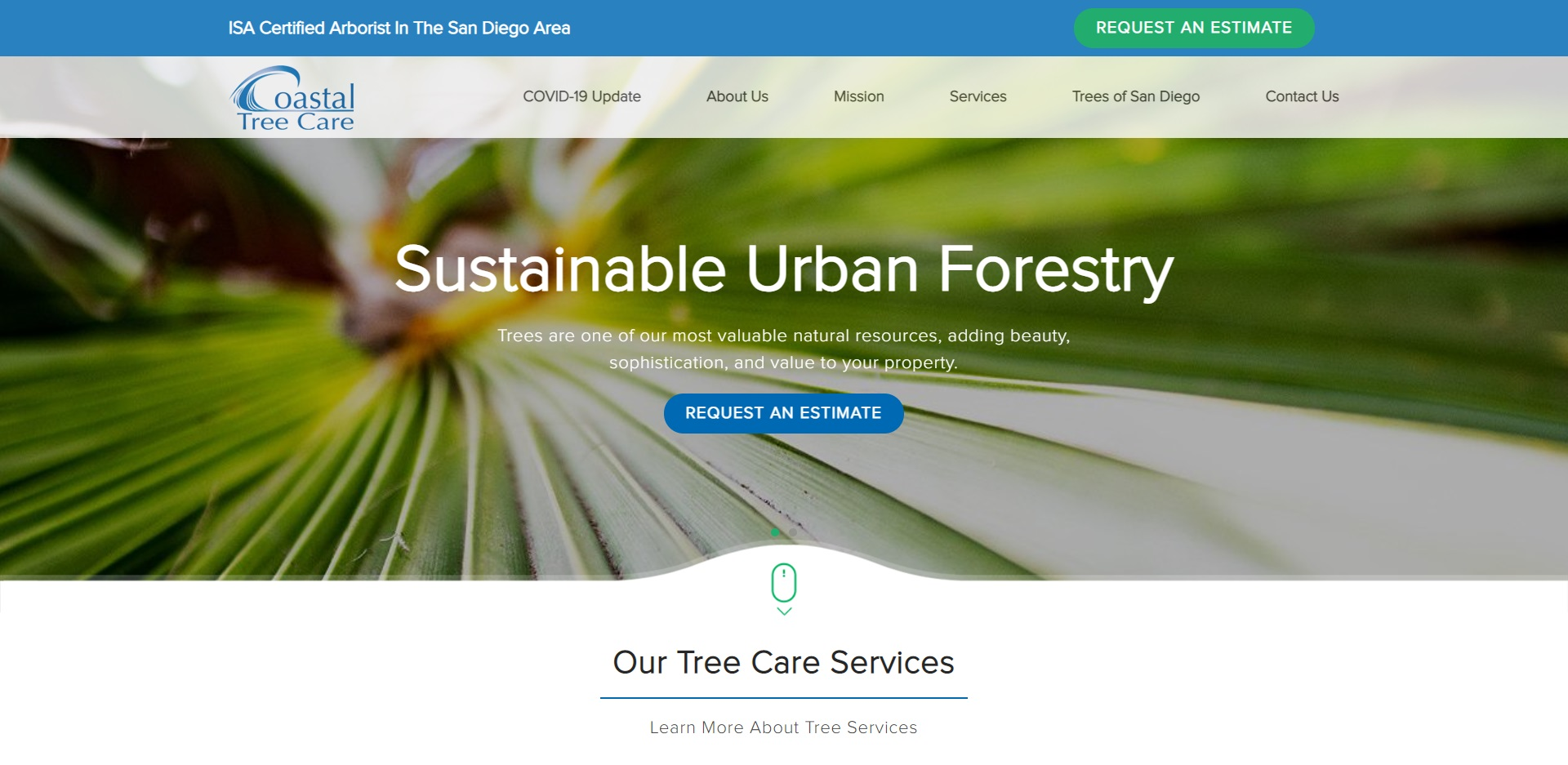 The Best Tree Services in San Diego