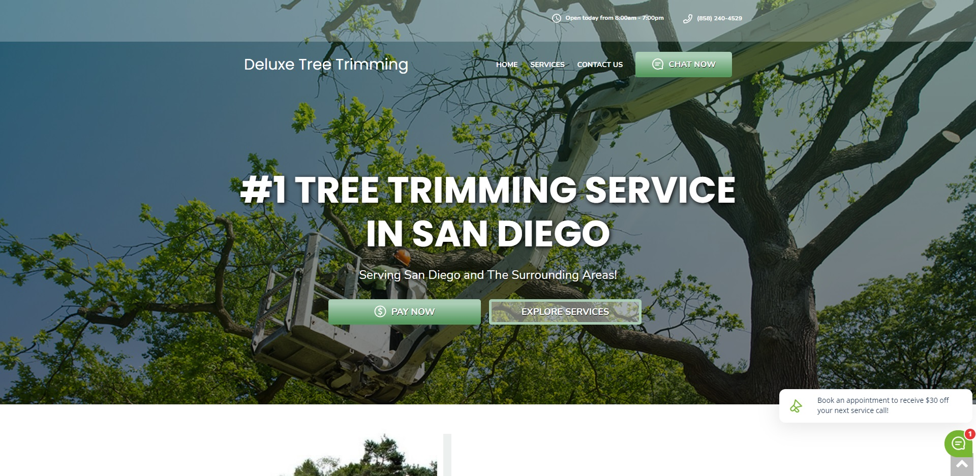 5 Best Tree Services in San Diego
