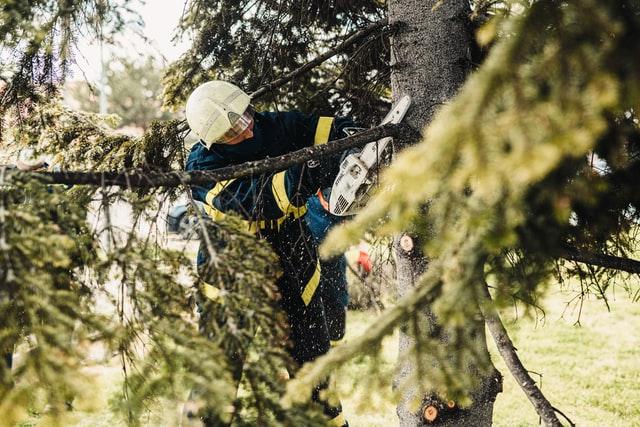 Best Tree Specialists in Phoenix