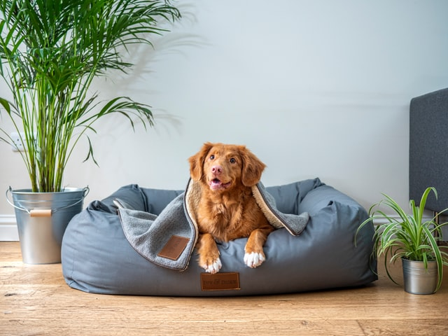 5 Pet Care Centers in San Diego