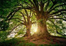 Best Arborists in San Diego