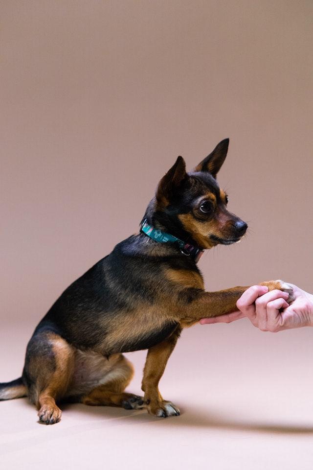 Best Pet Centers in San Jose