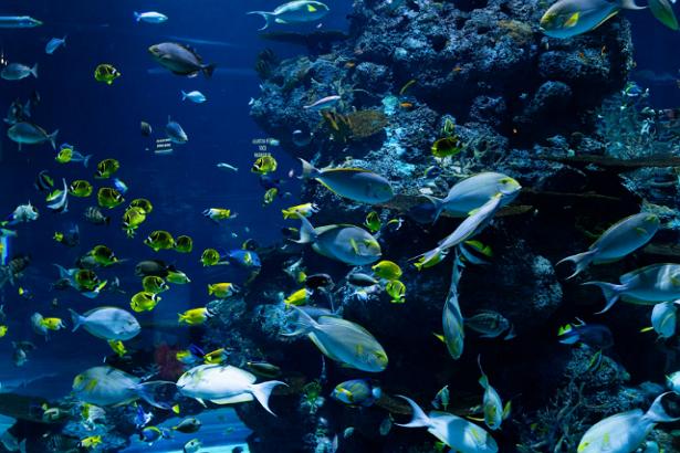 5 Best Aquariums-Zoos in Jacksonville