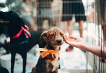 5 Best Pet Care Centre in San Francisco