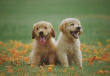 5 Best Pet Centers in Charlotte
