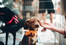5 Best Pet Care Centers in Dallas
