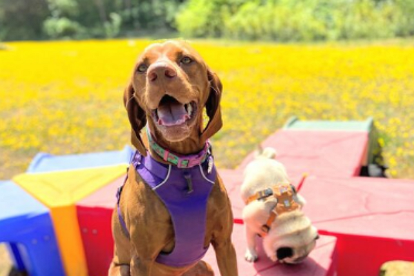 Vicki's Little Rascals Dog Daycare Ranch