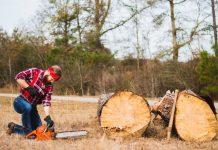 Best Arborists in Indianapolis