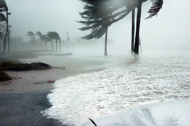 5 Best Hurricane Cleanup in Orlando, FL