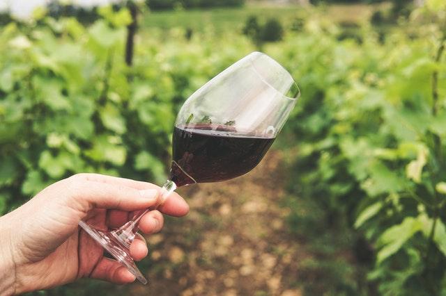 Long Island vineyards New Vine Wine Tours