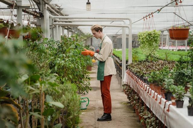 Best Gardeners in Phoenix, AZ
