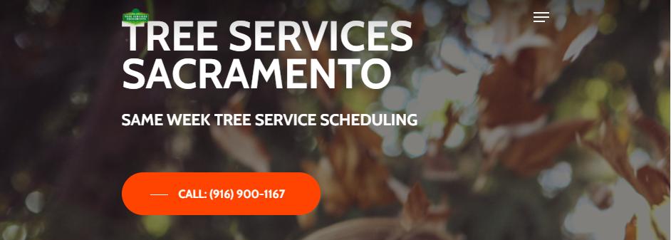 Safe Arborists in Sacramento