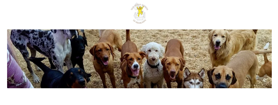 Skilled Dog Day Care Centers in Baltimore