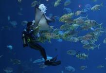 Best Aquarium/Zoos in Las Vegas