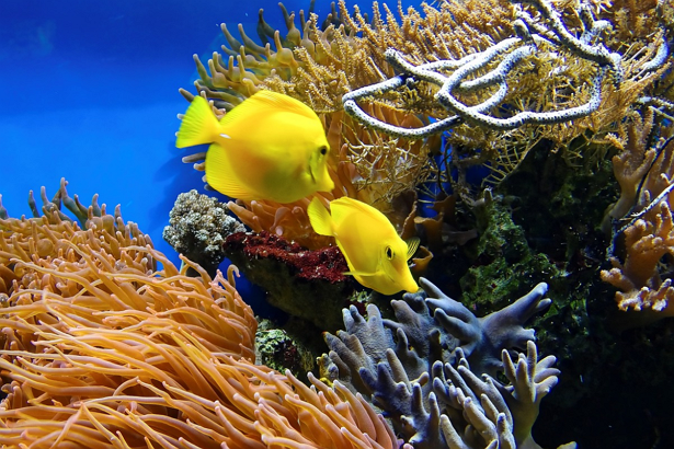 Best Aquariums/Zoos in Baltimore