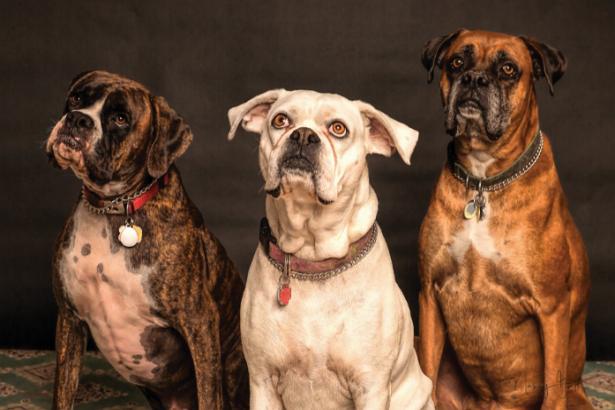 Best Dog Grooming in Denver
