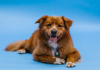 Best Dog Grooming in Oklahoma City