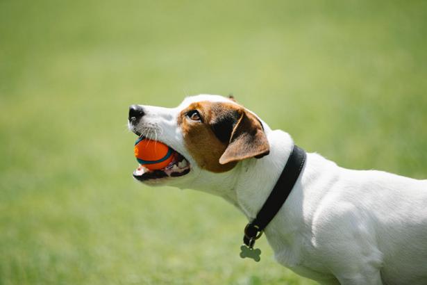 Best Dog Walkers in Tucson